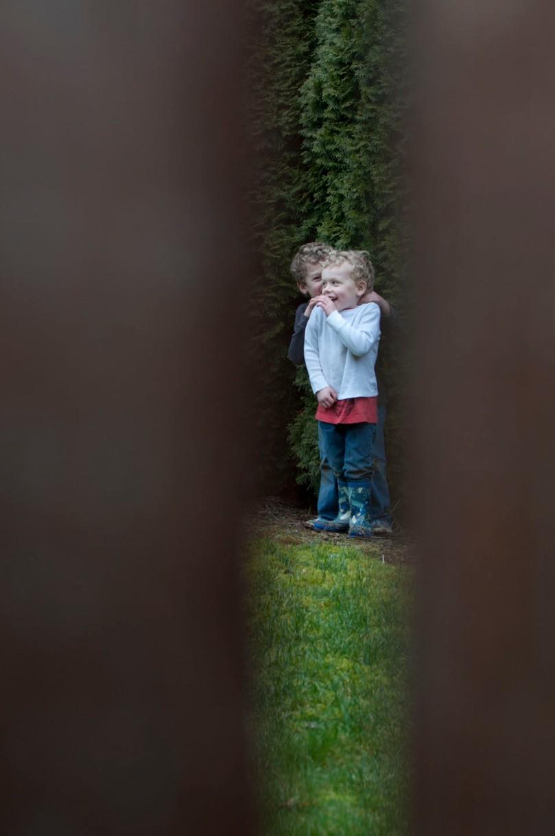 peeking through the fence